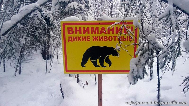 Внимание! Дикие животные.