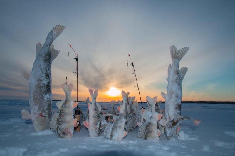 Зимняя рыбалка. Ловля щуки на жерлицы