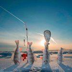 Зимняя рыбалка: ловля щуки на жерлицы